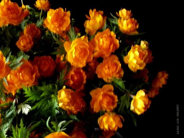 Фото с цветами огоньками